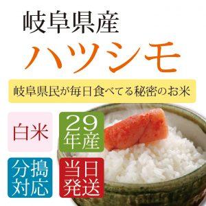 29_hatushimo_h